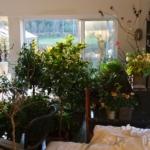 Vinter, planter og trivsel