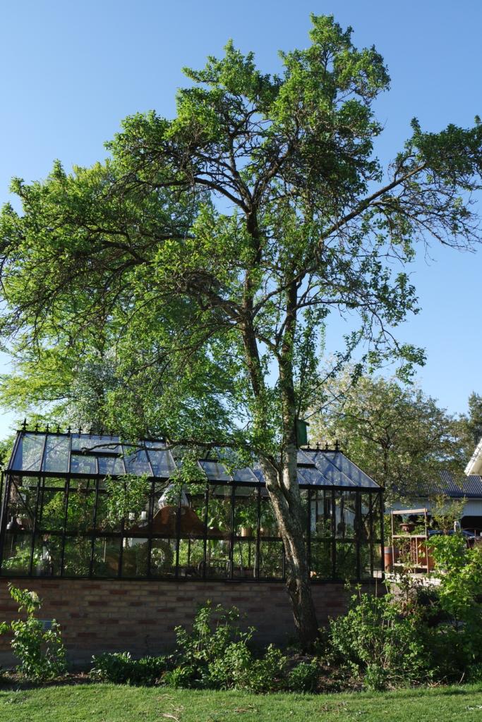 Placering av drivhus