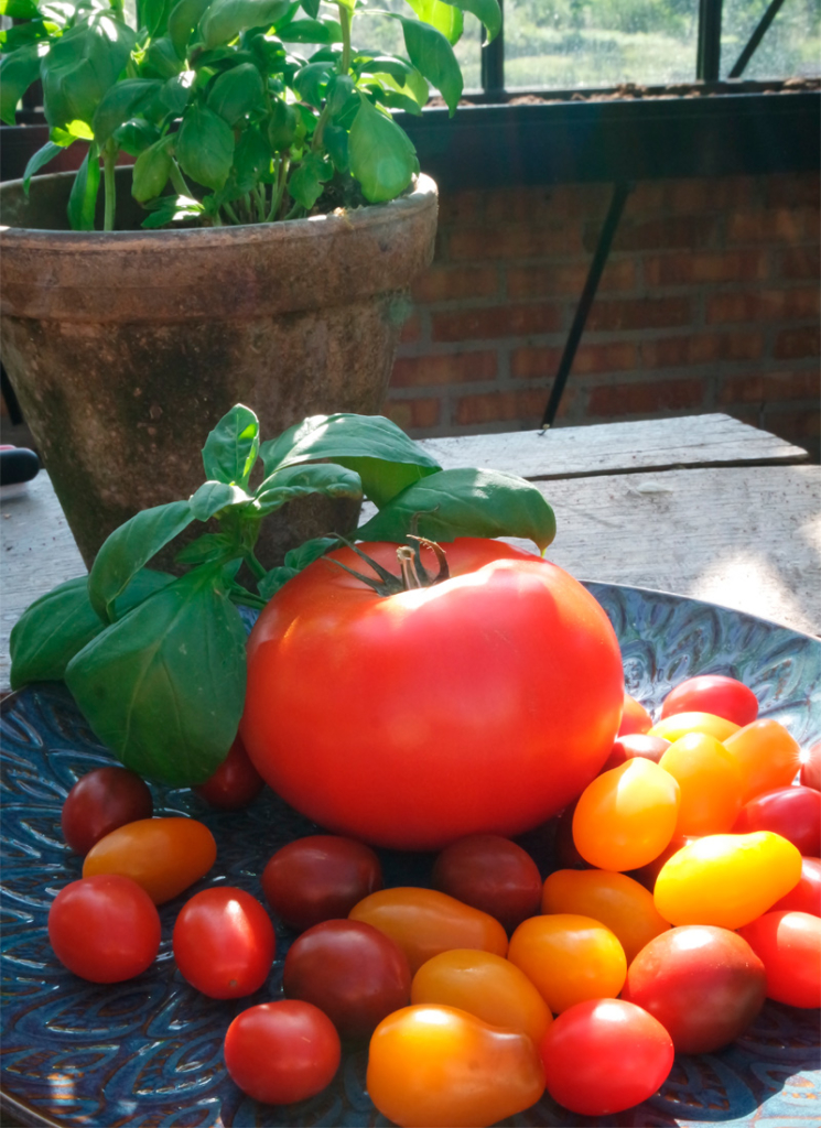tomatsalat på en skive smørstekt surdeigsbrød.