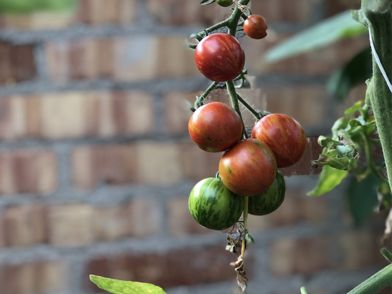 Toppe tomatene.