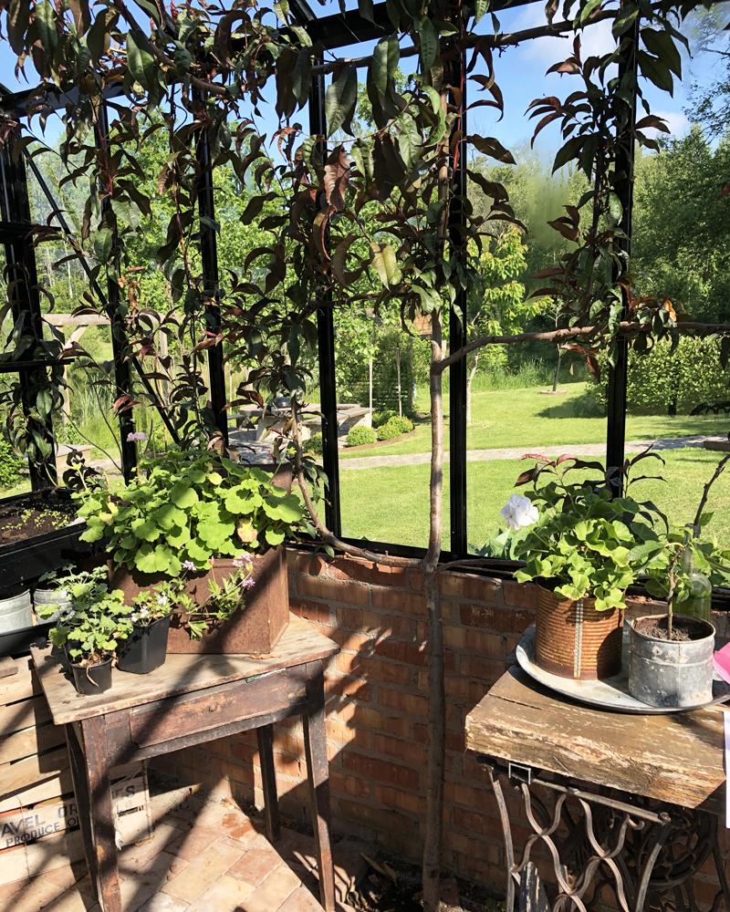 Solskjerming i drivhuset – plant et tre!