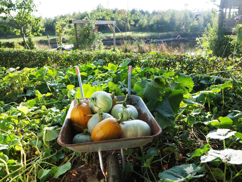 Gresskar –tydelig tegn på at det er høst