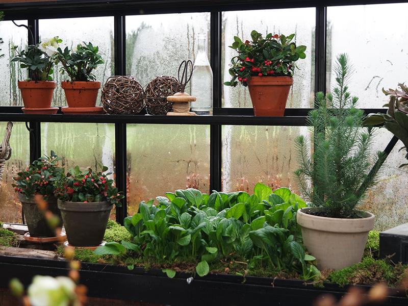 Hva vokser i kjøkkenhagen nå?