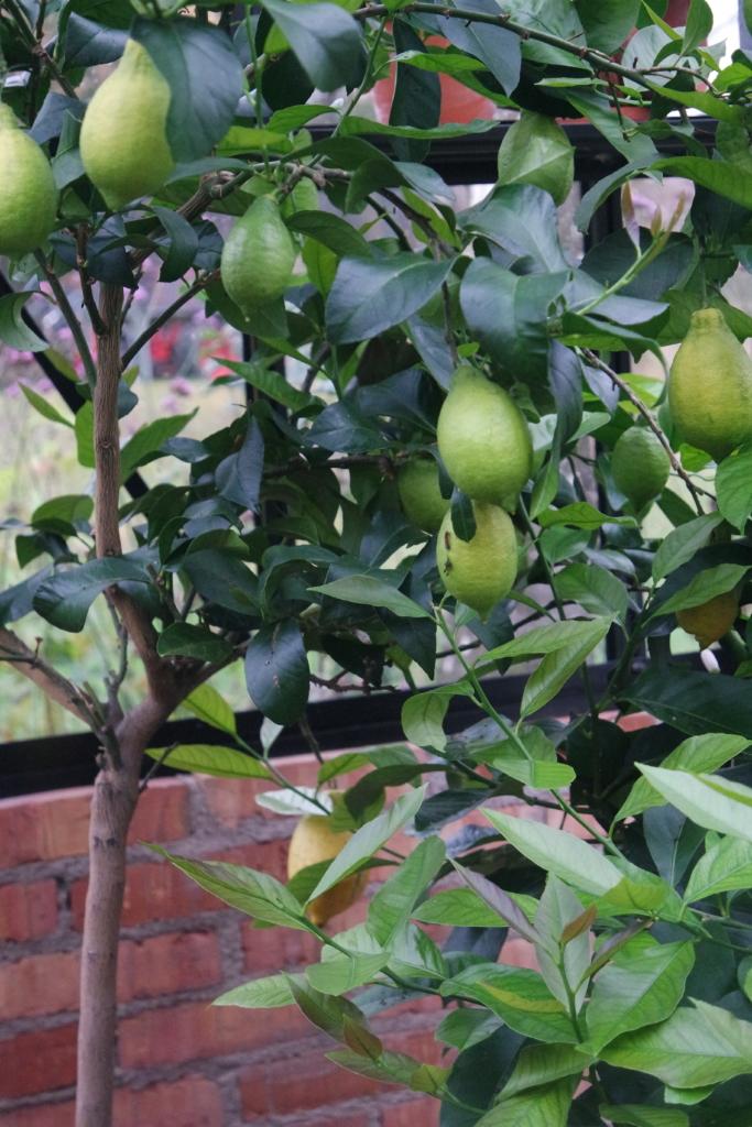 Vinteroppbevaring av planter i drivhuset – vifte og isolasjonstelt